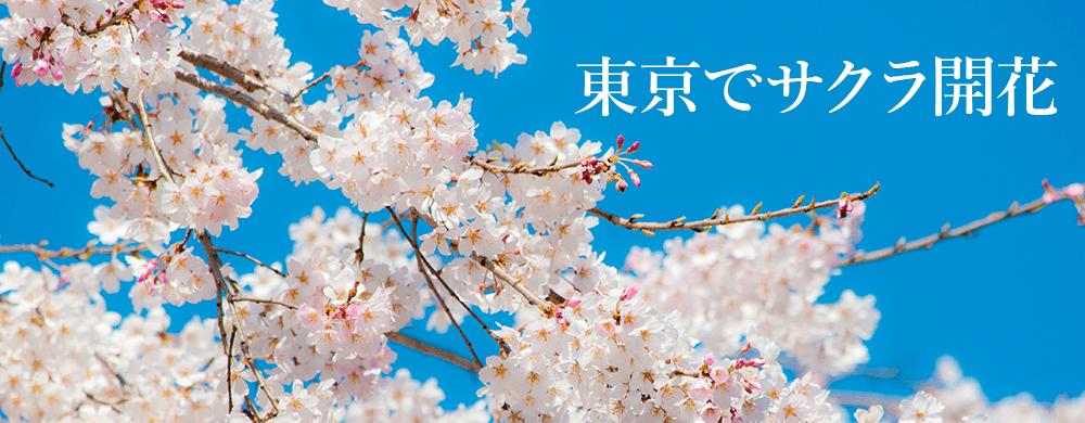 気象庁が2016年の東京での桜の開花を発表